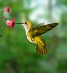 Bird-with-Flower3-e1390067586844