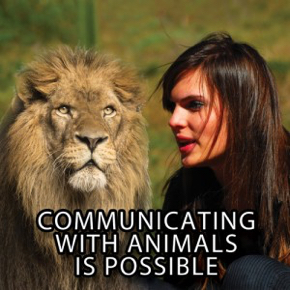 animal-communicators