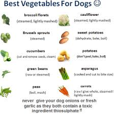 18.Fruits-and-vegetable-that-are-safe-for-dogs